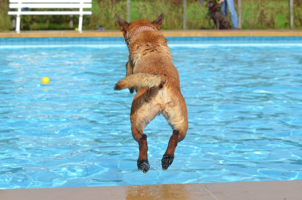 FitBark_dog_jumping_pool-1030x682 | How Can You Make The Pool Safer For Your Swimming Dog?