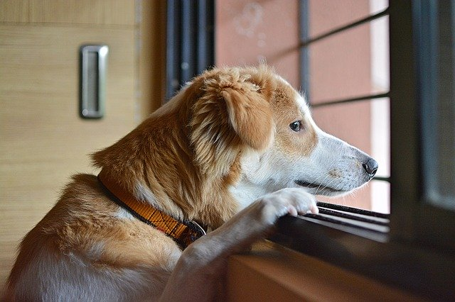 FitBark_dog_window | Getting A Second Dog? Be Ready For Something Different