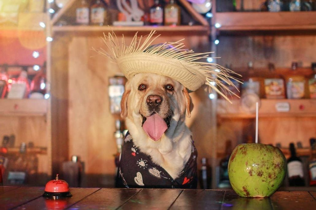 FitBark_yellow_lab_party_hat-1030x687 | 9 Tips for Photographing Your Dog Like a Pro