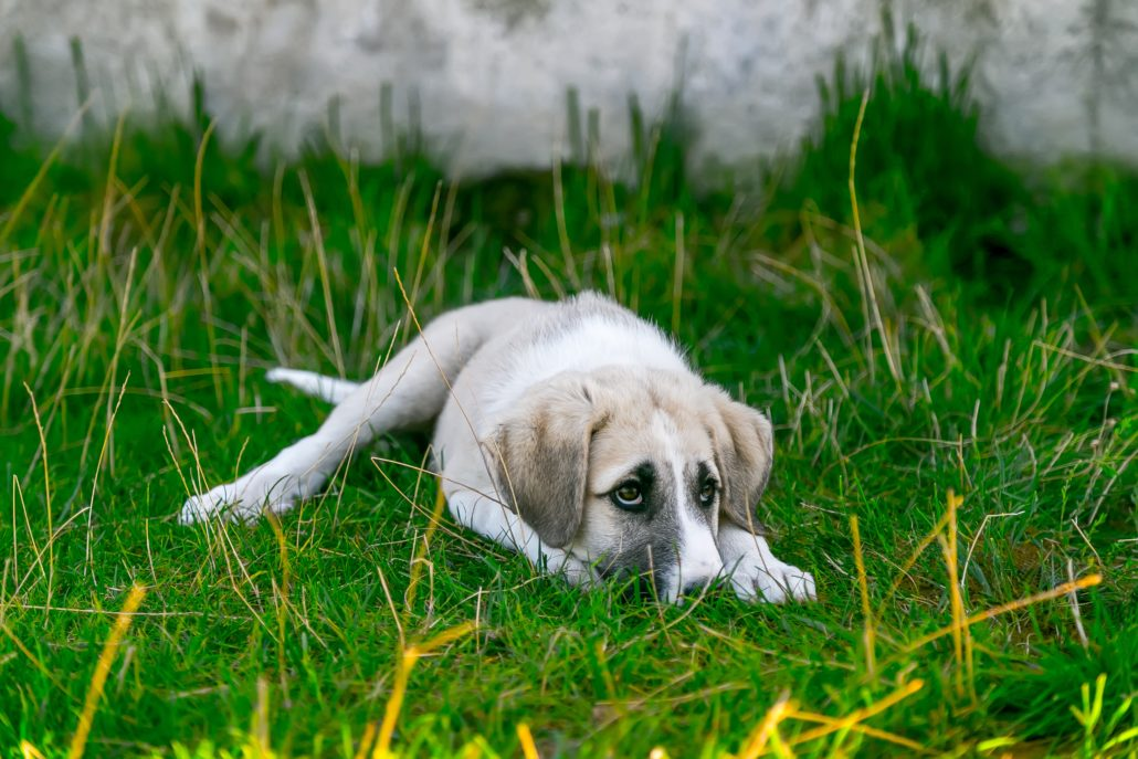 FitBark_dog_grass_outside-1030x687 | Vital Facts about Dog Epilepsy