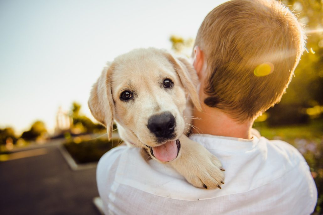FitBark_puppy_over_shoulder_sunset-1030x687 | Coronavirus in Dogs – Everything You Need to Know