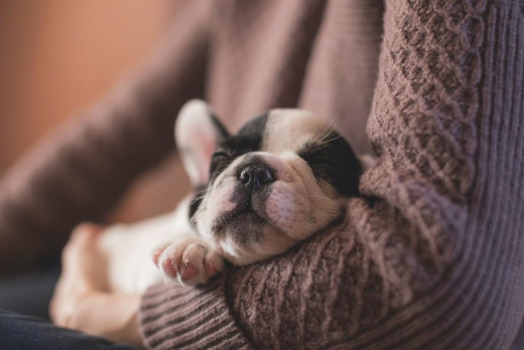 FitBark_sleepy_puppy-1030x687 | 4 Reasons Why You Should Have a Pet in Your House