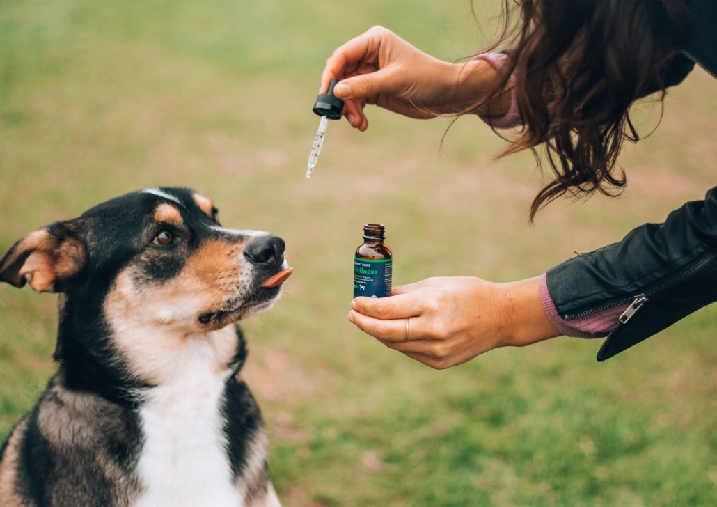 FitBark_aussie_cbd_outside-1030x728 | Canines And Cannabis—Is CBD Safe For Your Pet?