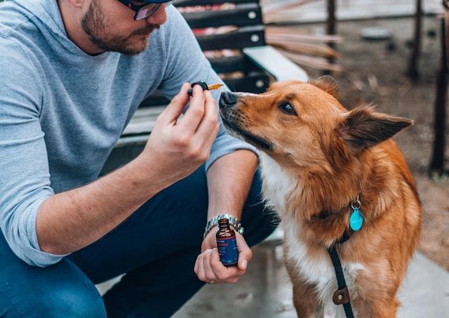 FitBark_dog_cbd_oil | CBD for Dogs: 3 Essential Things You Must Know