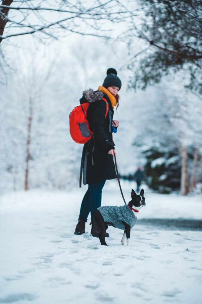 FitBark_person_walking_dog_snow_winter-687x1030 | How to Prepare for Winter as a Pet Owner