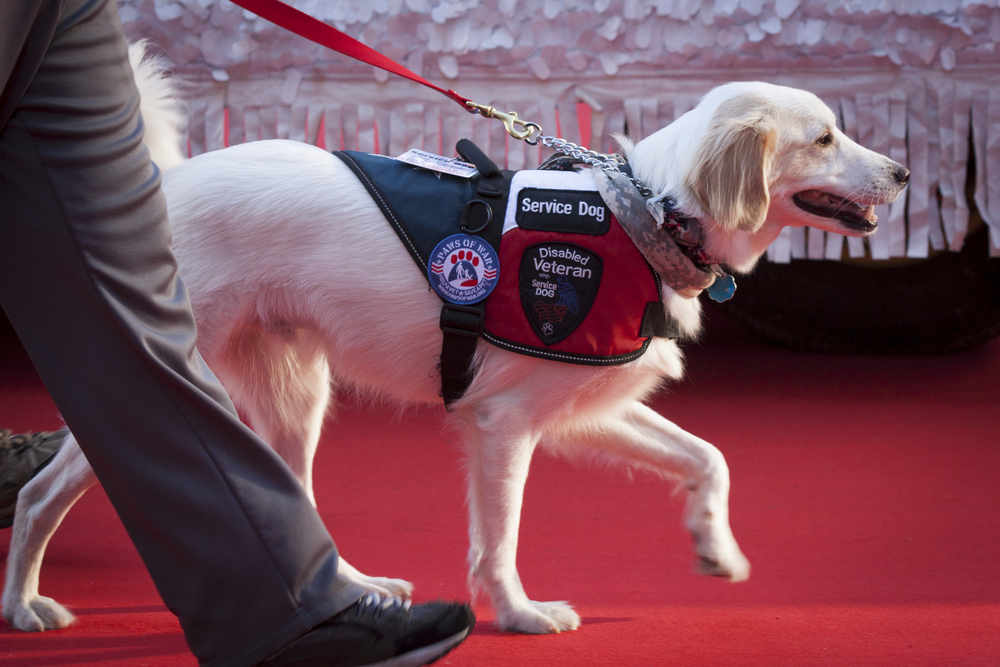 FitBark_service_dog_walking_vest | 10 Different Types of Service Dogs