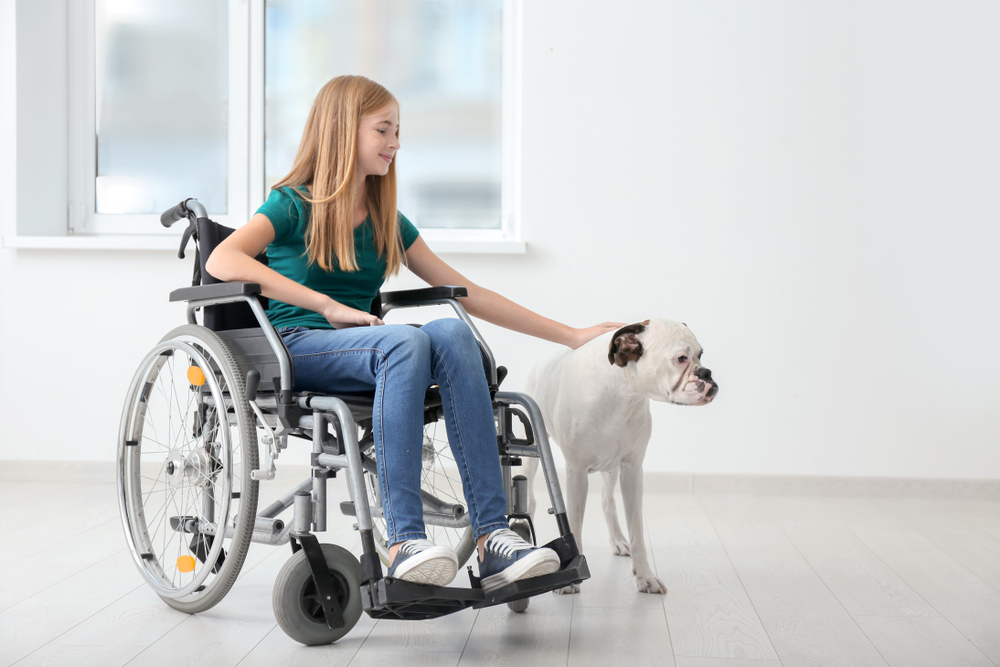 FitBark_wheelchair_dog | 10 Different Types of Service Dogs