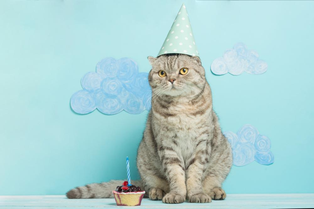 FitBark_cat_birthday_hat | 8 Ways to Celebrate Your Dog's (or Cat's) Gotcha Day!