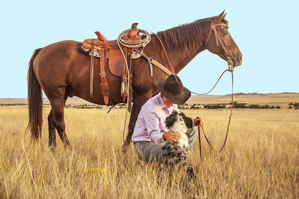 FitBark_cowboy_horse_dog_field-1030x685 | Can Dogs Have Horses Best Friends?