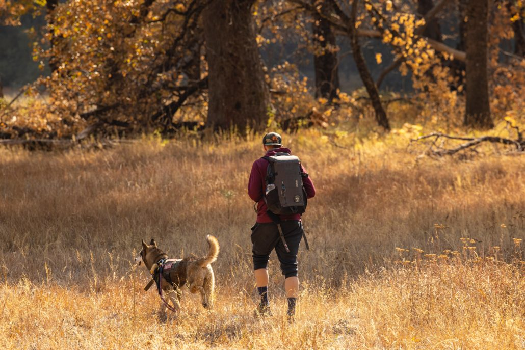 FitBark_man_outside_hiking_dog-1030x687   7 Dog Breeds That Are Perfect For Being Your Hiking Partners