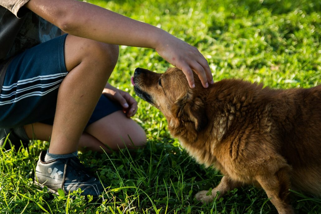 FitBark_dog_outside_grass_pet_furry-1030x687   6 Ways to be a Sustainable Pet Parent