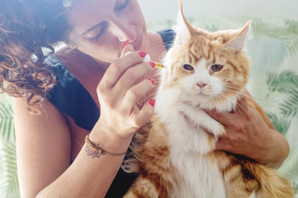 FitBark_cbd_oil_cat_fluffy_woman-1030x686   Can CBD Help Oil Help Pets With Anxiety?
