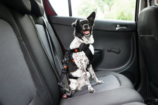 FitBark_dog_car_harness_seatbelt   Keeping Your Dogs Safe in the Car While Travelling
