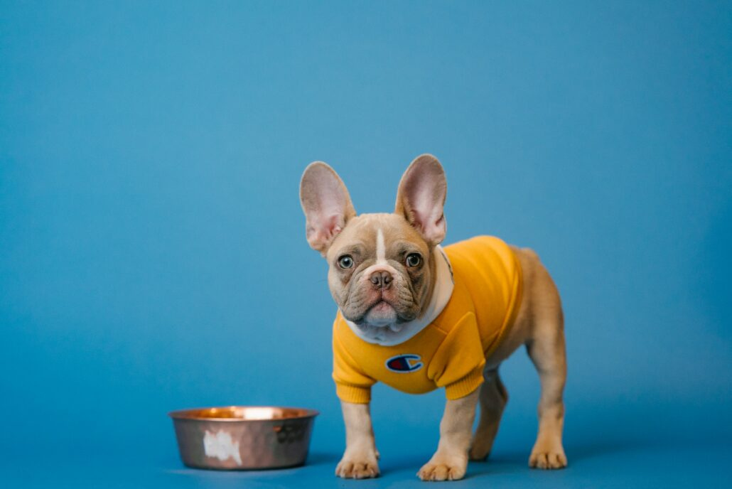 FitBark_dog_food_frenchie_french_bulldog-1030x688 | Good Eats for a Good Dog: Finding the Best Diet for Your Pup